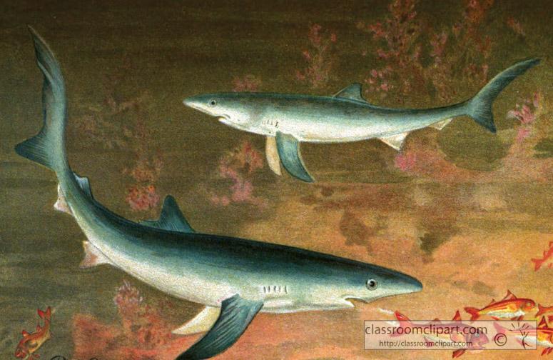 blue-shark-color-historic-illustration.jpg