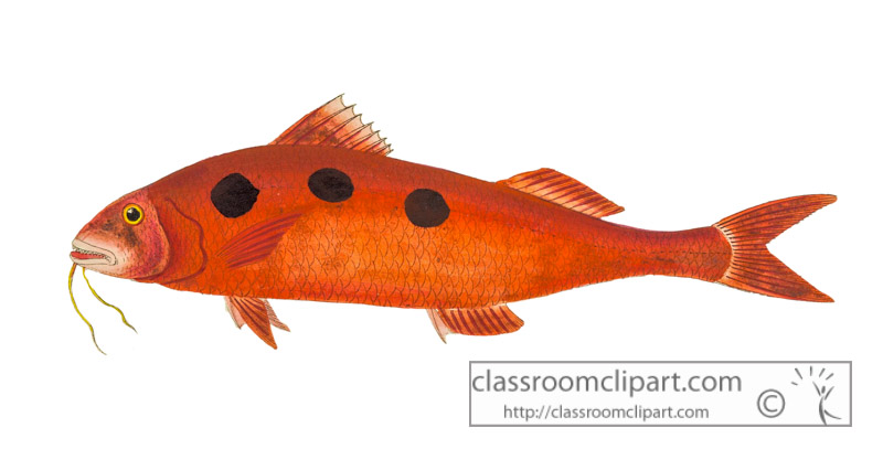 color-illustration-of-red-black-spotted-fish.jpg