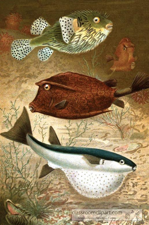 glove-fish-copper-fish-color-historic-illustration.jpg