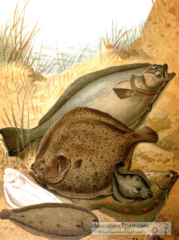 group-of-flat-fish-color-historic-illustration.jpg