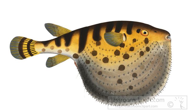 illustration-of-star-puffer-fish.jpg
