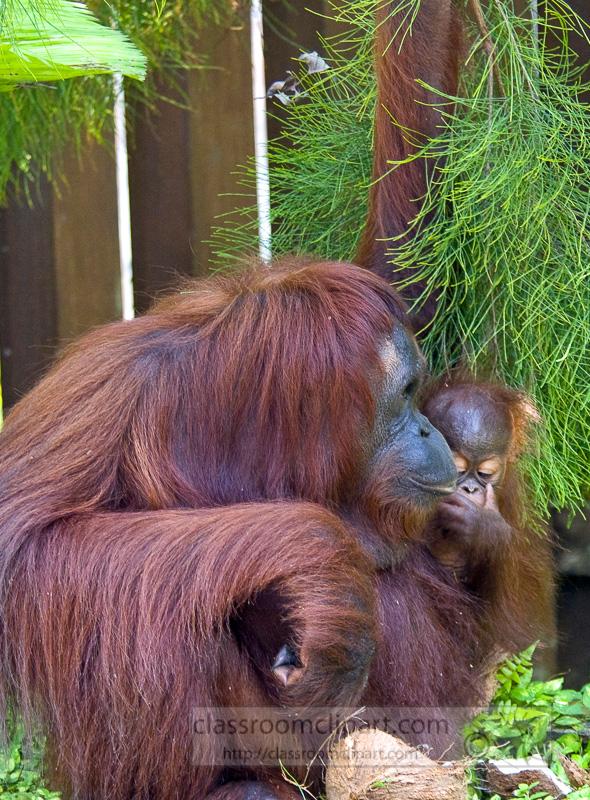 Borneo_1540a.jpg