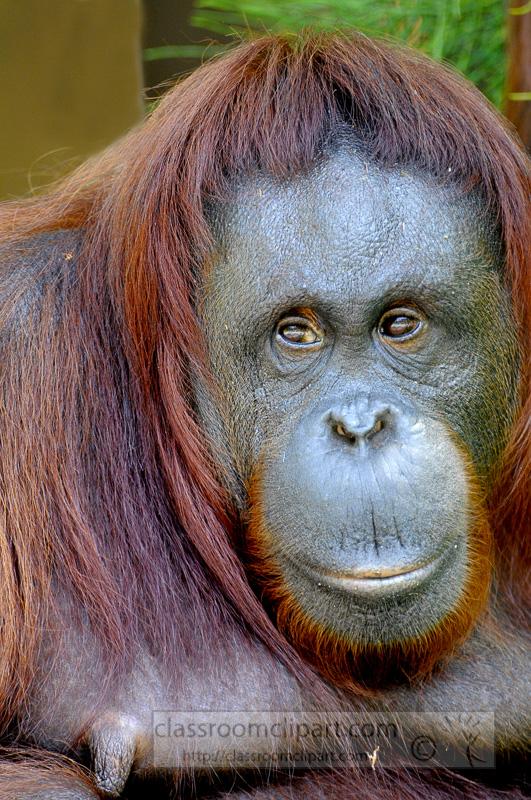 Borneo_1555ae.jpg