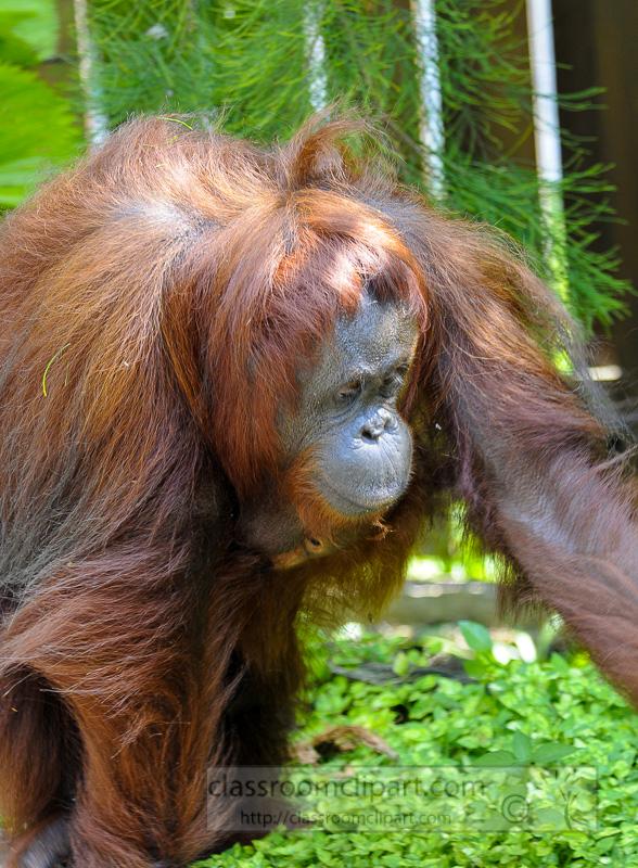 Borneo_1562a.jpg