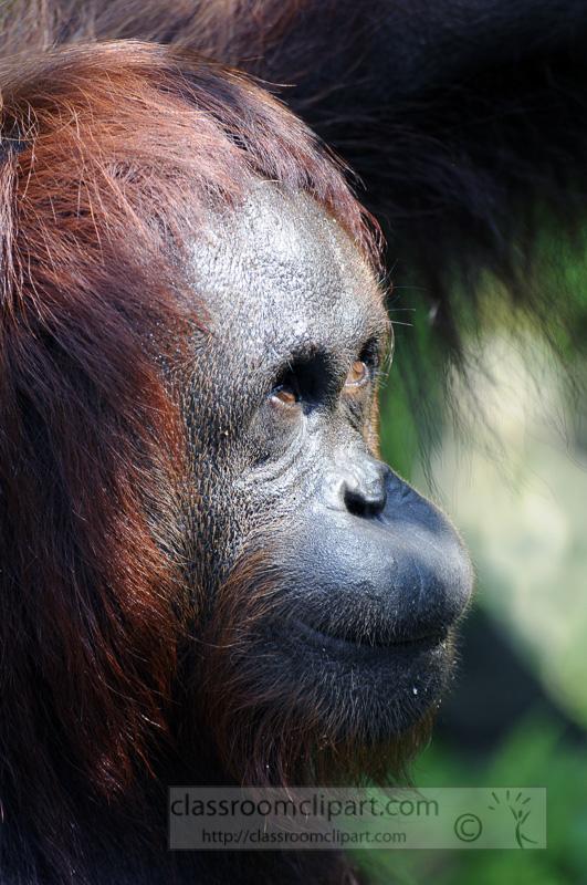 Borneo_1573a.jpg