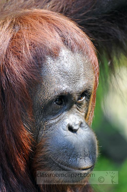 Borneo_1574ae.jpg