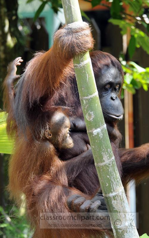Borneo_1603a.jpg