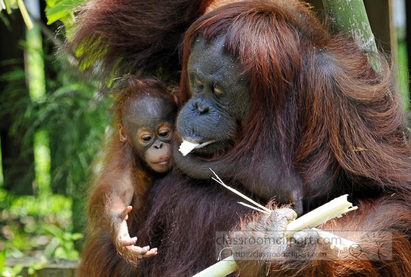 Borneo_1617a-Edit.jpg