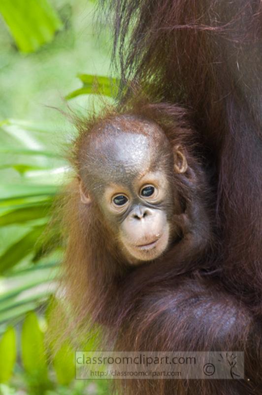Borneo_1625a.jpg