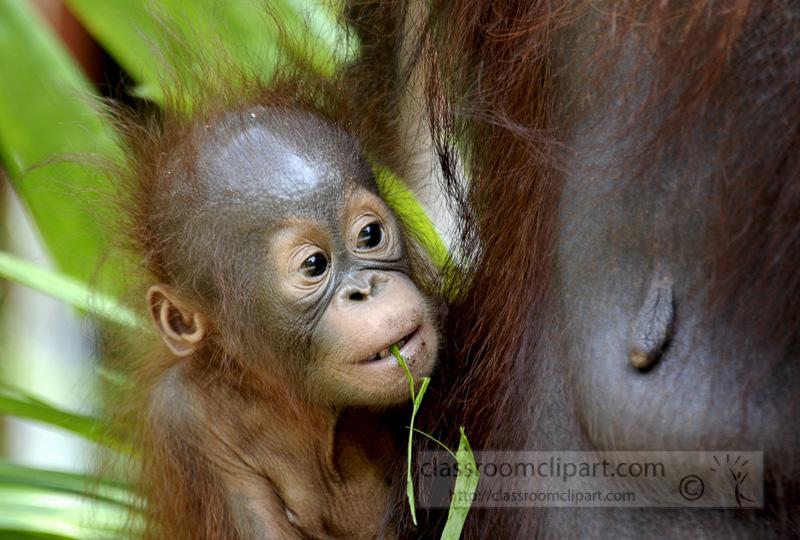 Borneo_1656a.jpg