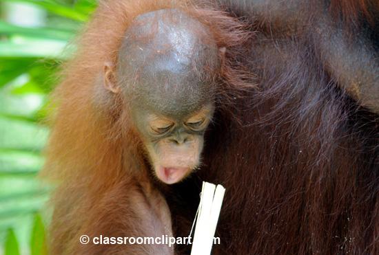 Borneo_1663A.jpg