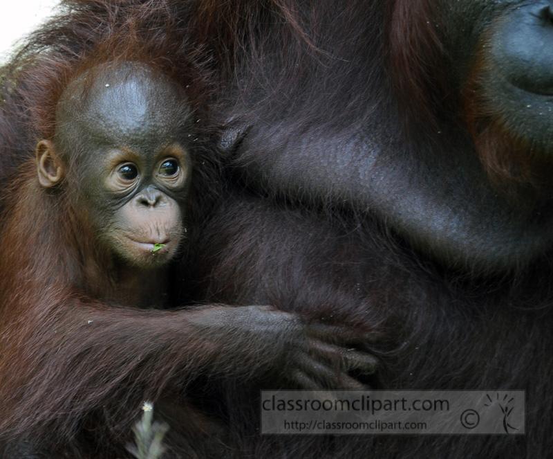 Borneo_1673a.jpg