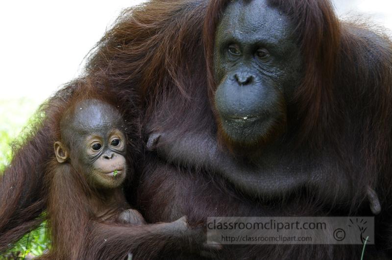 Borneo_1675a.jpg