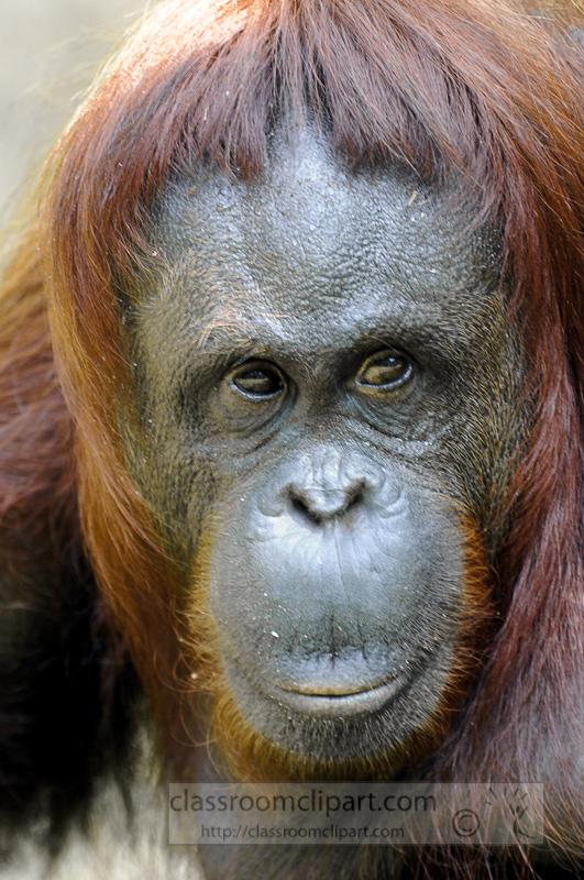 Borneo_1688a.jpg