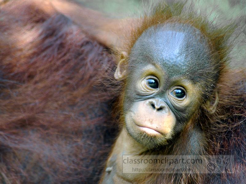 Borneo_1700a.jpg