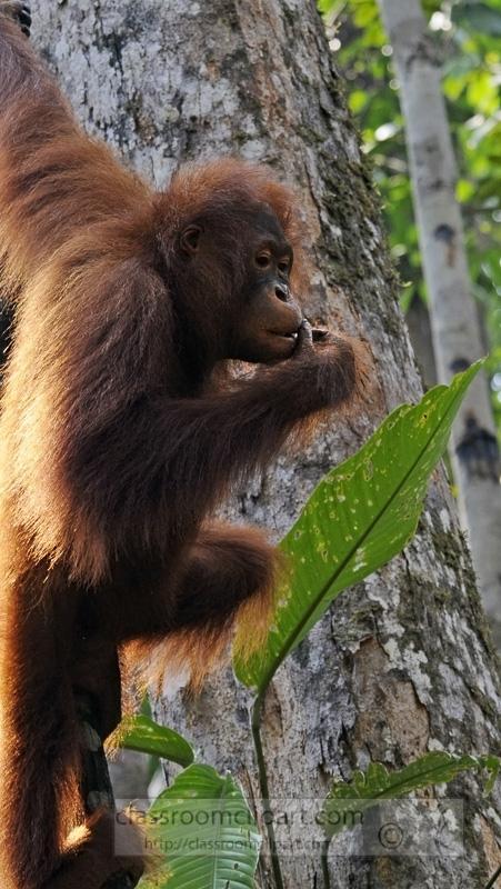 Borneo_1739a.jpg