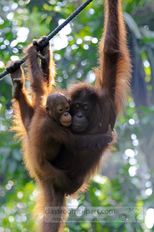 Borneo_1752a.jpg