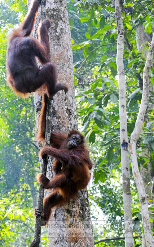 Borneo_1781a.jpg