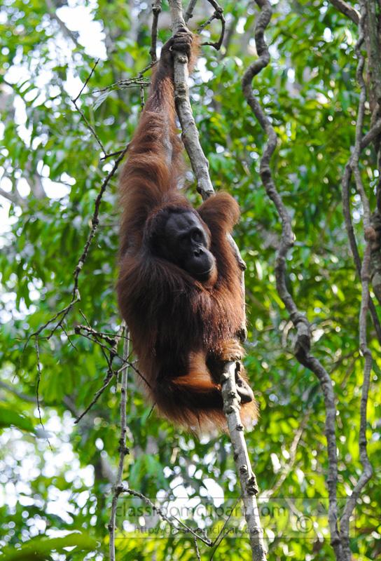 Borneo_1797a.jpg