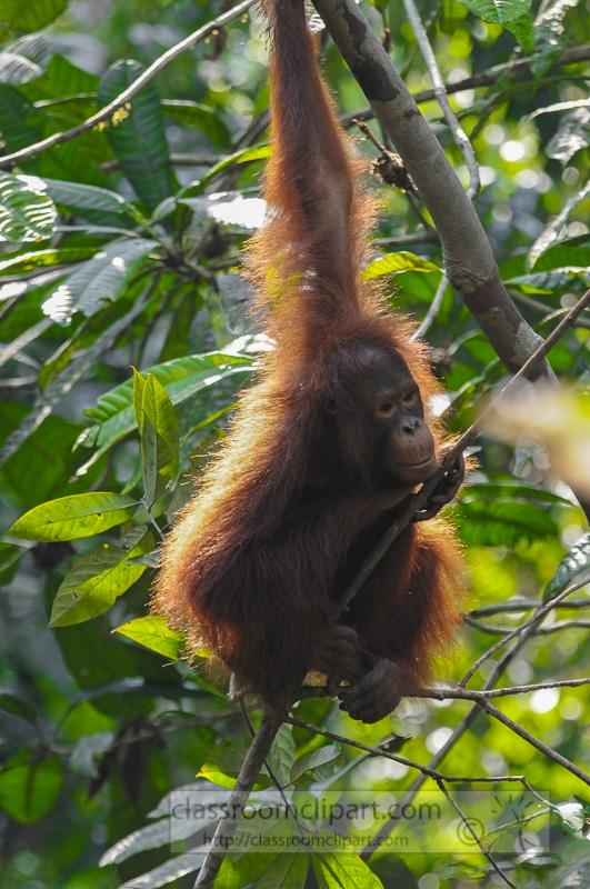 Borneo_1813a.jpg