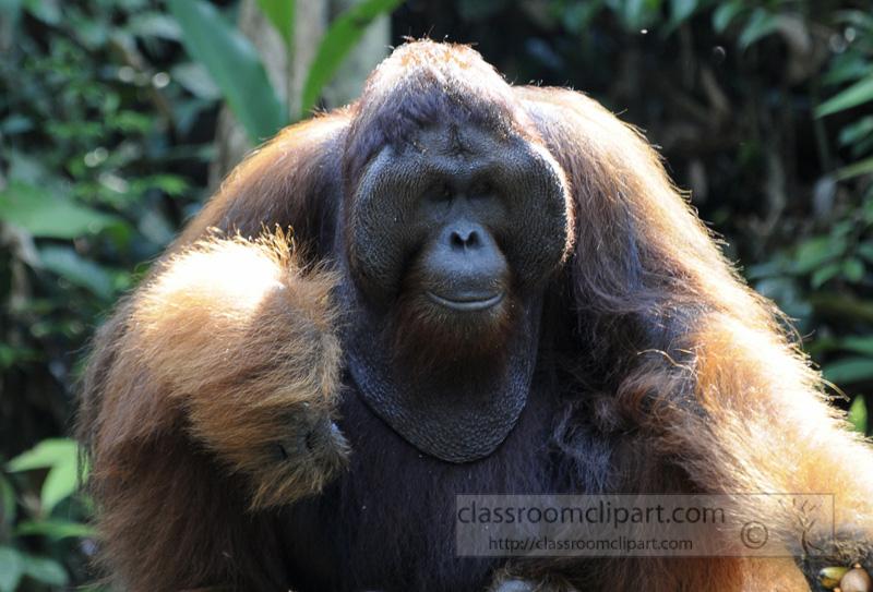 Borneo_1875a.jpg