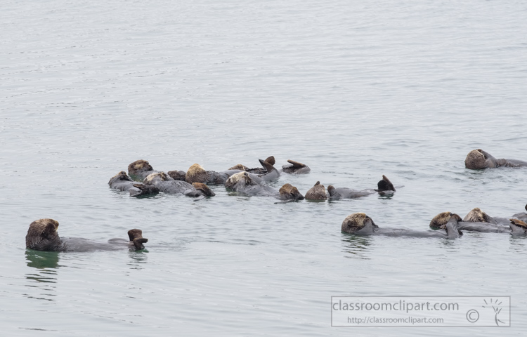 photo-sea-otter-floating-along-california-coast-7453E.jpg