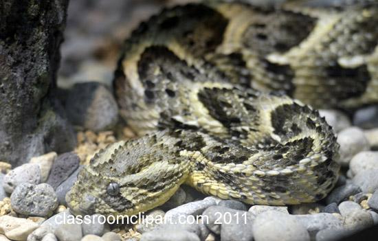 snake-1128A.jpg