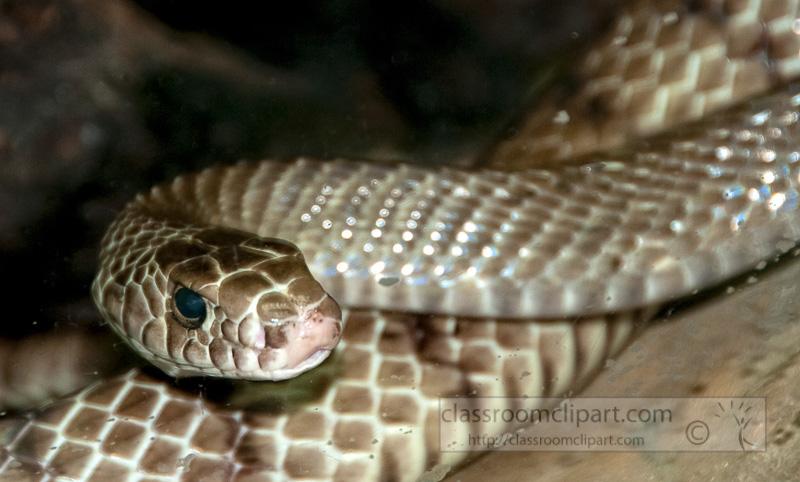 snake-at-bangkok-snake-farm-4639.jpg