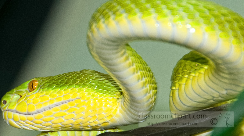 snake-at-bangkok-snake-farm-4662.jpg