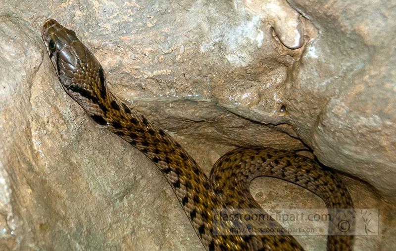 snake-at-bangkok-snake-farm-4788.jpg