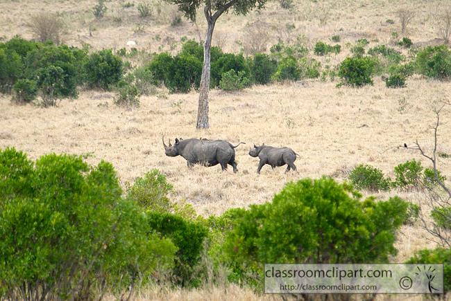 5_masai_rhinoceros_27.jpg