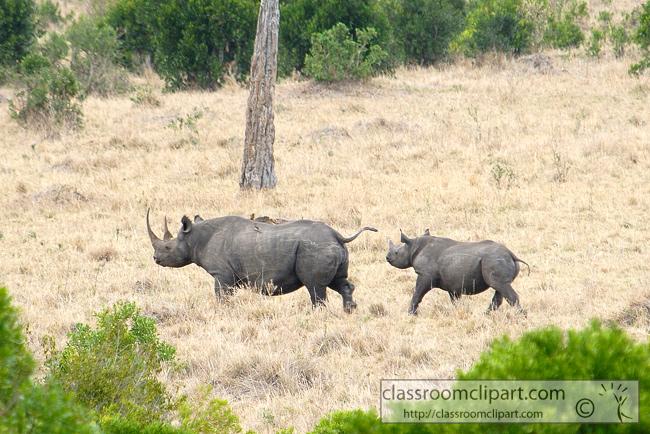 5_masai_rhinoceros_28.jpg