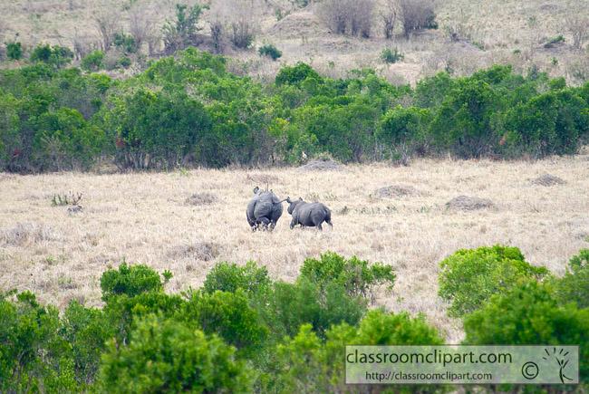 5_masai_rhinoceros_29.jpg