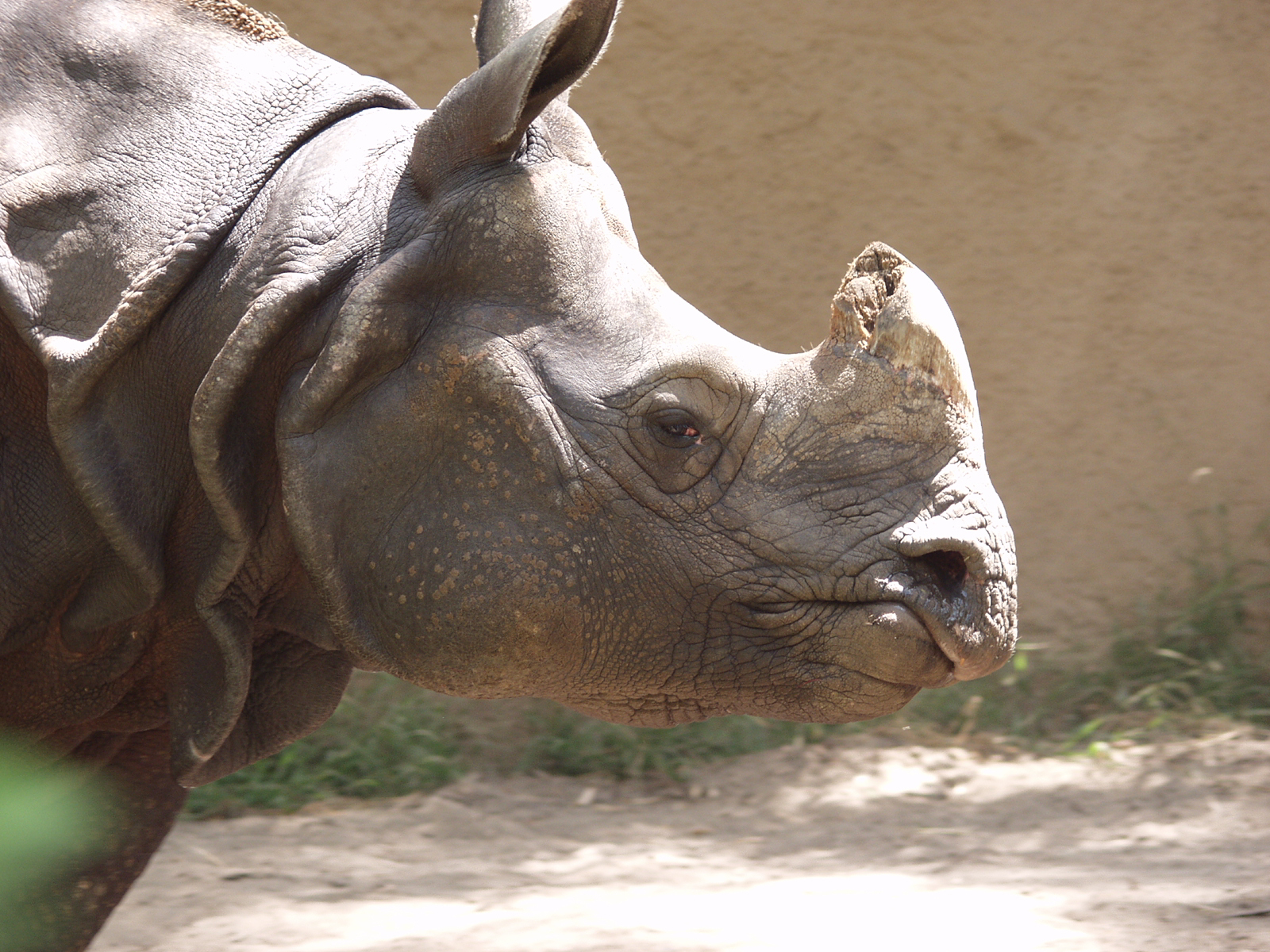 rhino0003.jpg