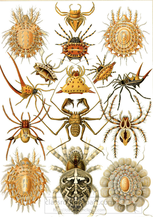color-sceintific-illustration-of-various-species-of-arachnids.jpg