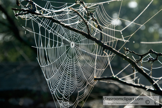 flooding_spider_web_4116.jpg