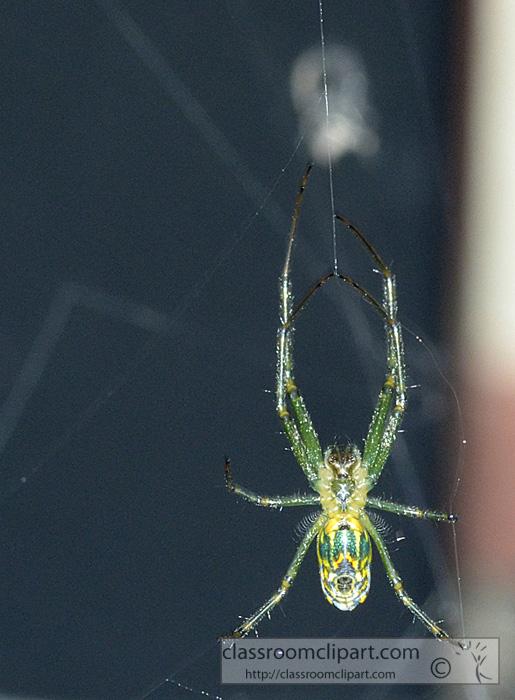 green-spider-8375.jpg