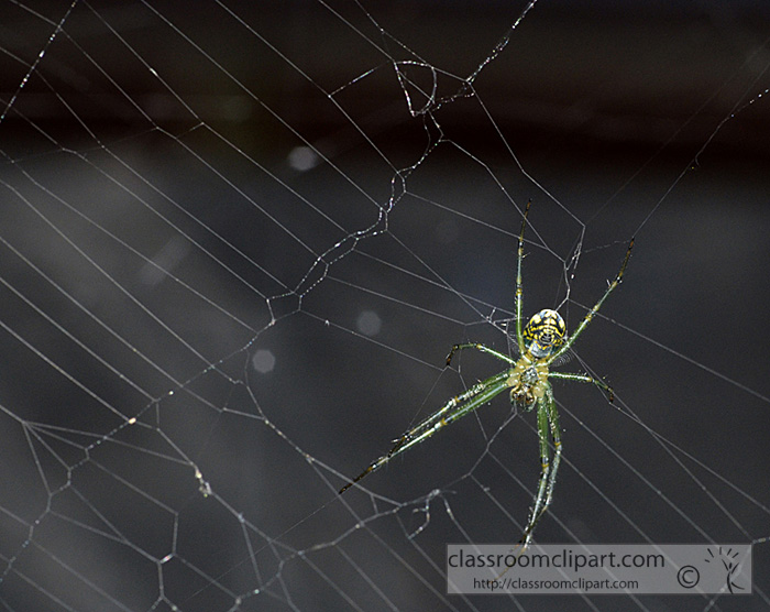 green-spider-with-web.jpg