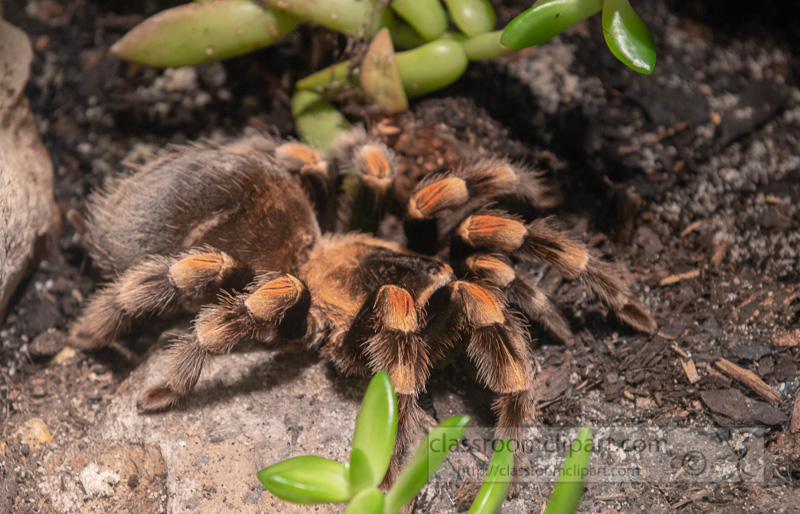 invertebrate-arthropod-tarantula-photo-4128.jpg