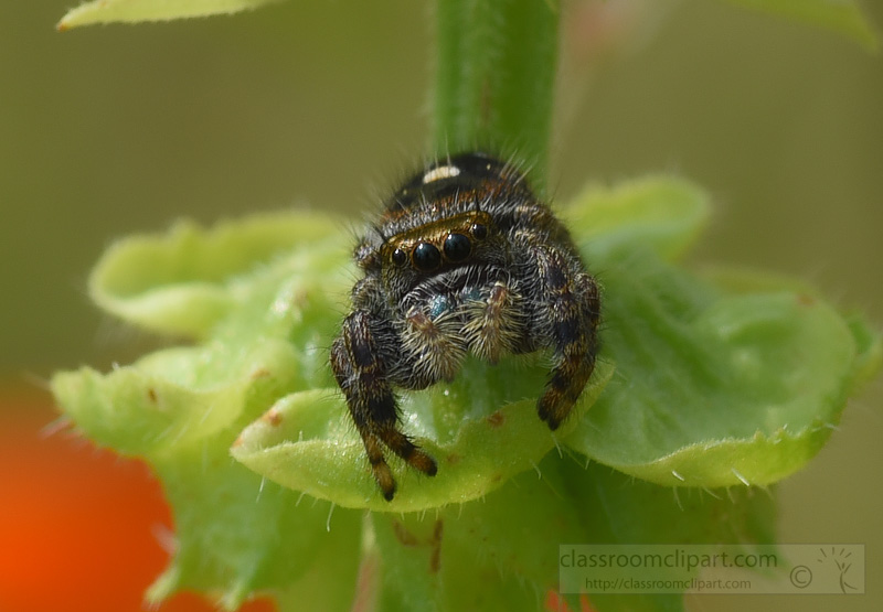 spider-front-view-picture-92A.jpg
