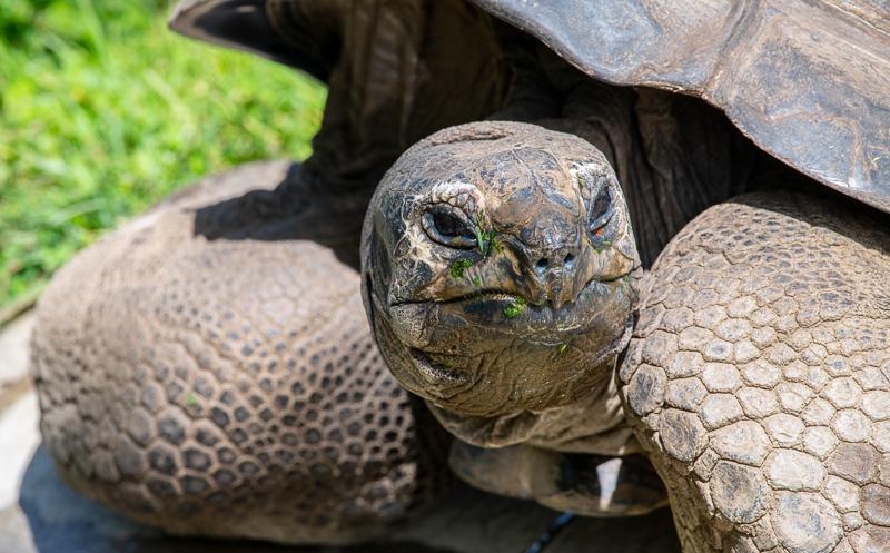 geochelone-gigantea-aldabra-tortoise-photo-5025.jpg