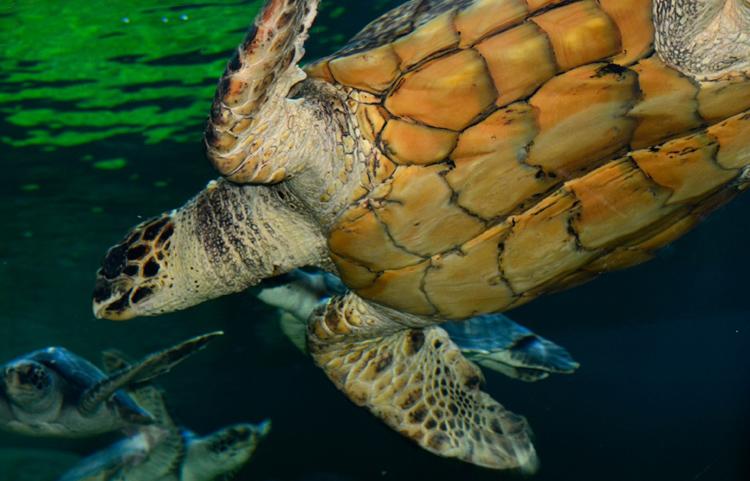 sea-turtle-0528A.jpg