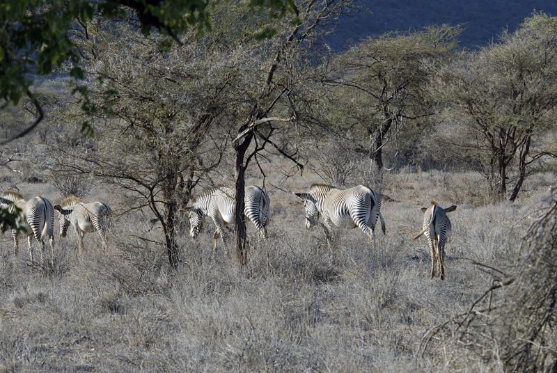 zebra_africa_08.jpg