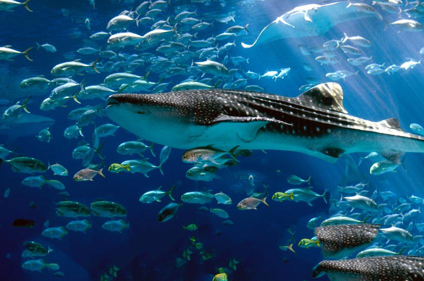 shark_with_fish_300.jpg