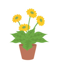 Plant cartoon. Plants animated clipart gifs