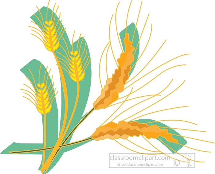 cereal-grass-wheat-clipart-2.jpg