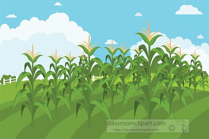 rows-of-corn-growing-in-field-clipart.jpg