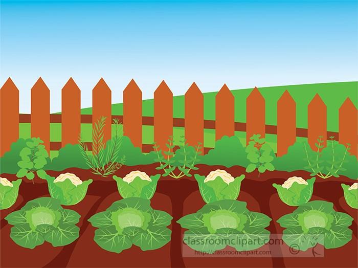 vegetable-garden-with-lettuce-clipart-318.jpg