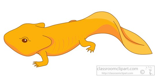 animal clipart amphibian clipart amphibian newt clipart 5725 rh classroomclipart com newt clipart black and white new clipart software