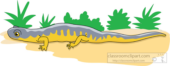 gray-yellow-salamander-on-sand.jpg
